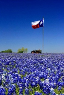 Texas flag flowers