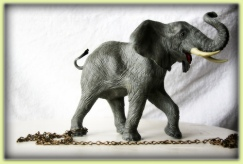 Elephant+Chained