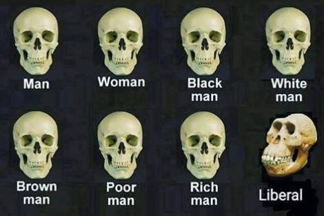Stupid-liberals-skulls
