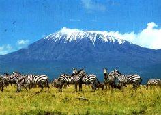 mount-kilimanjaro-zebra